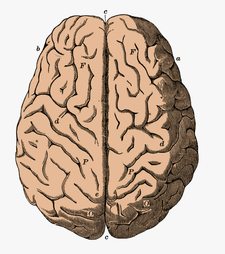Brain Clipart Png 85803.