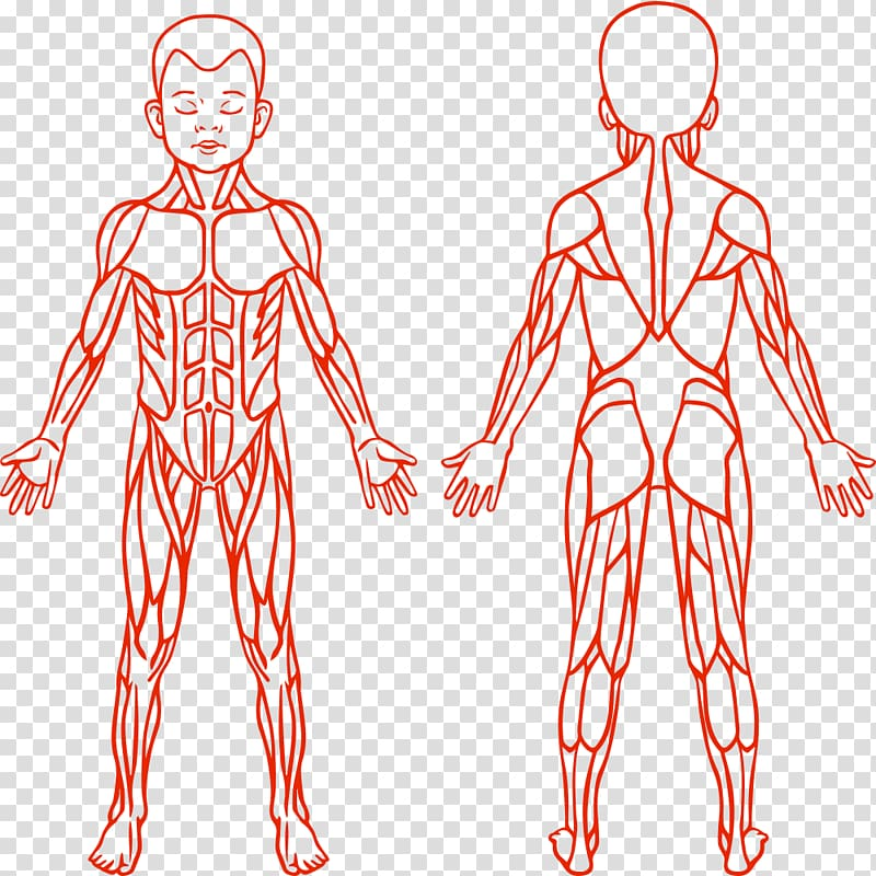 Anatomy clipart for kids joints clipart images gallery for.