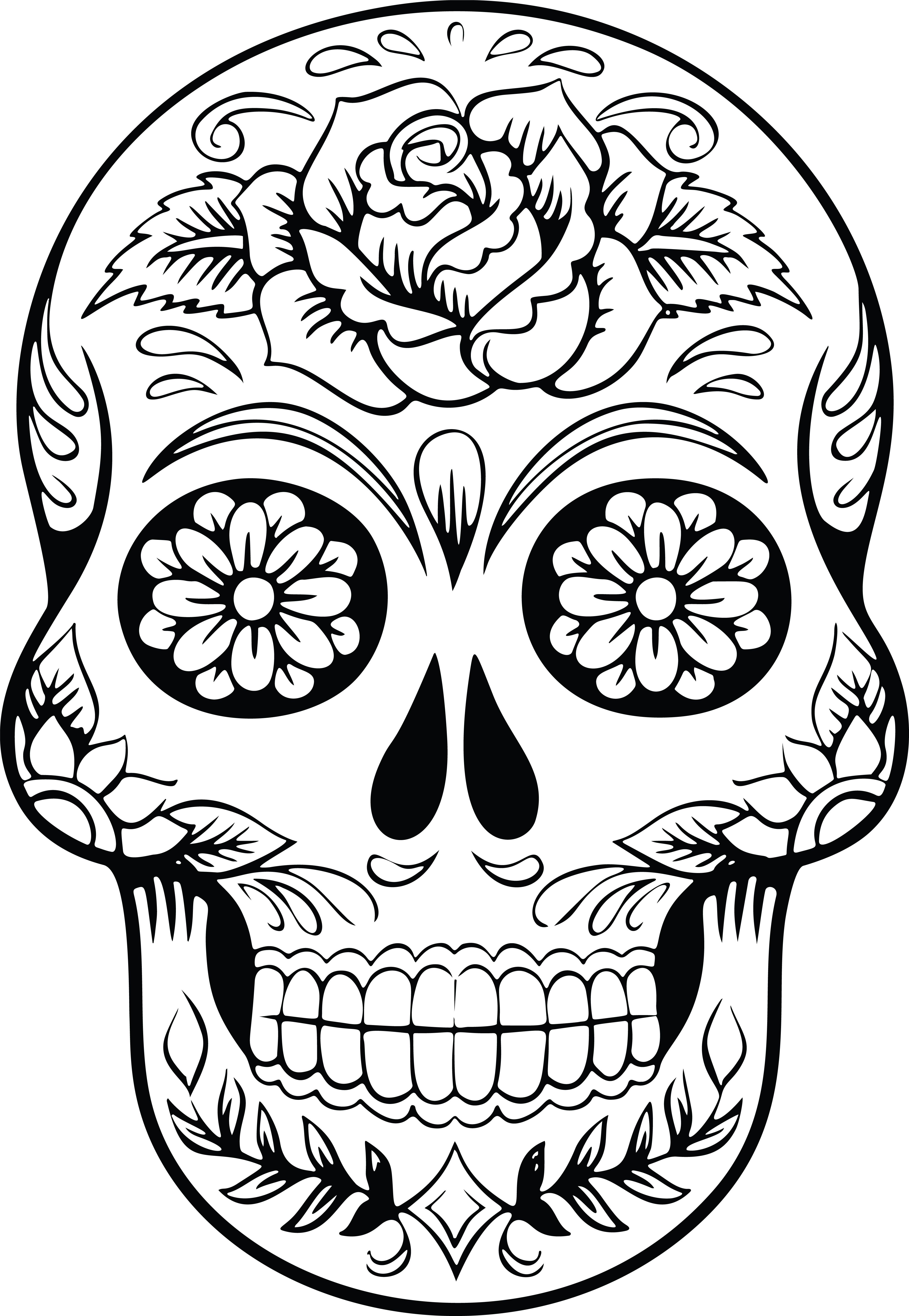 coloring ~ Coloring Pages Free Skull Anatomy Muscular Book.