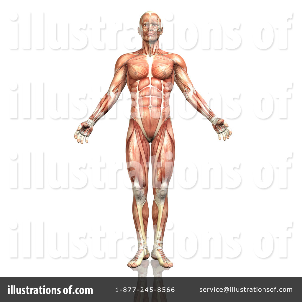 Anatomy Clipart #1300902.