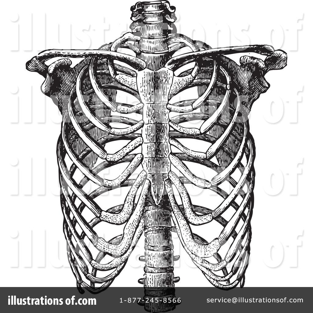 Anatomy Clipart #433959.