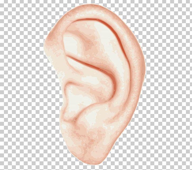 Ear Anatomy Inner Ear Hearing PNG, Clipart, Anatomy, Chin.