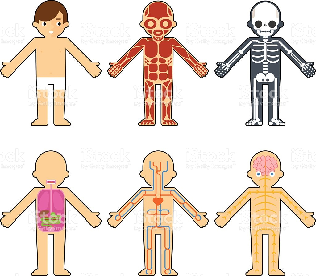 1991 Human Body free clipart.