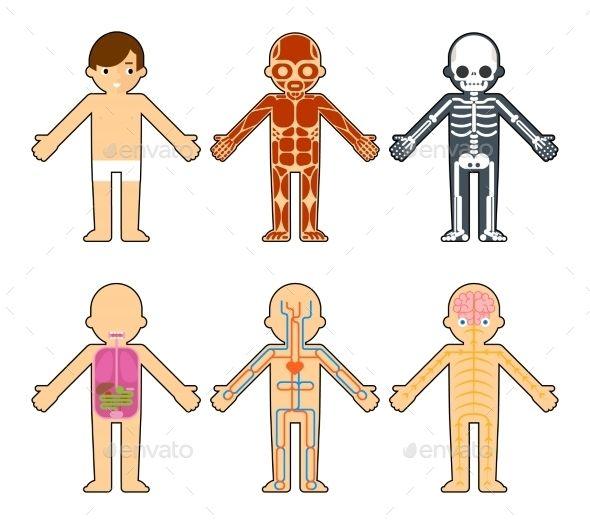 Body Anatomy For Kids.