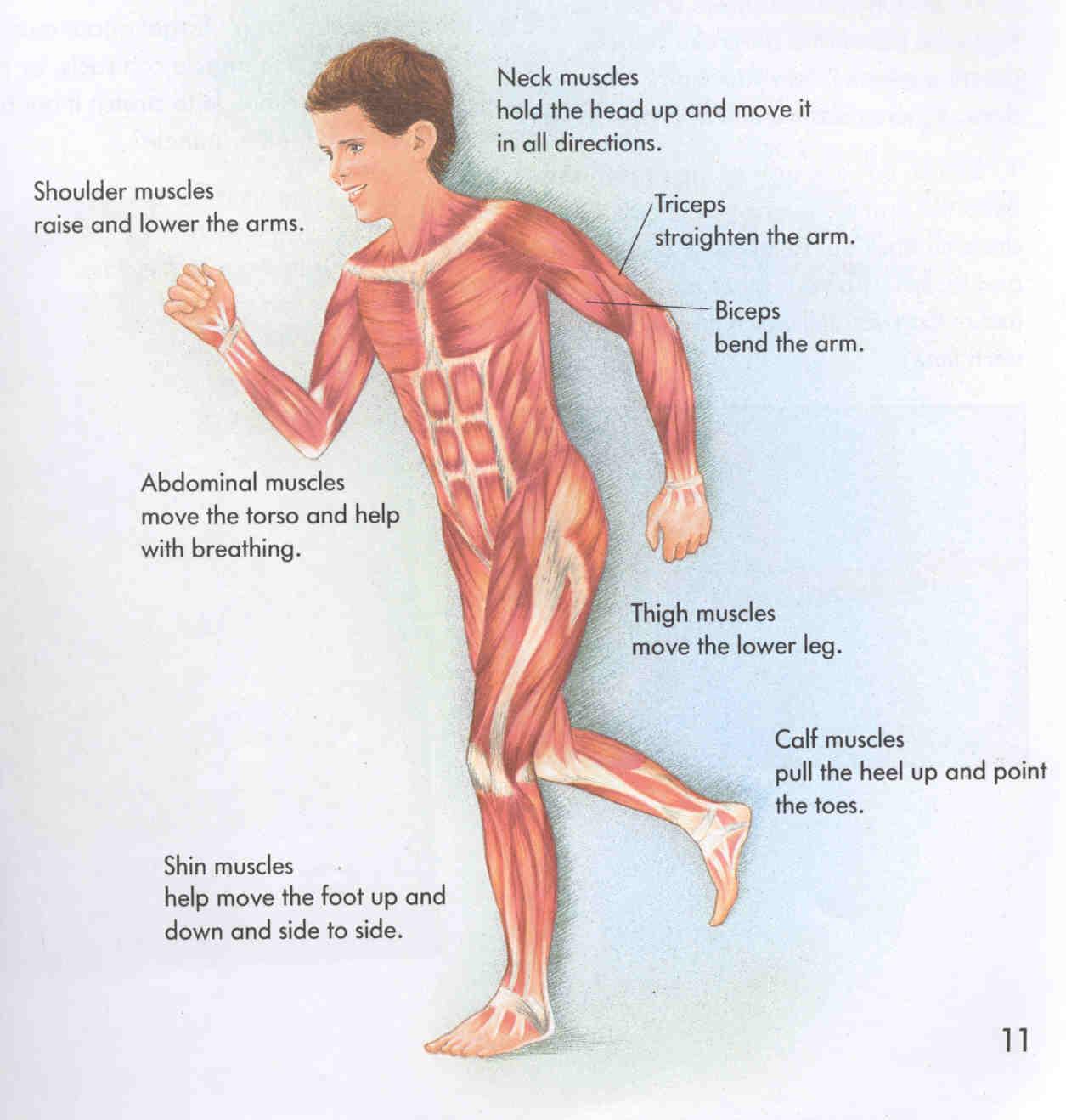 Muscoskeletal.