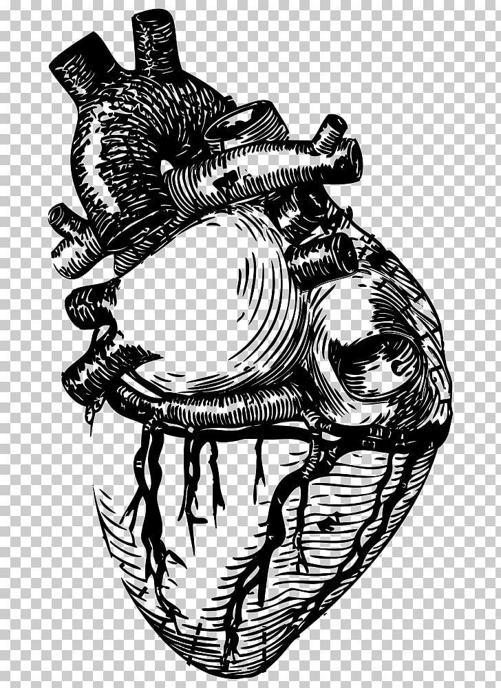 Drawing Line art Anatomy Heart , heart PNG clipart.