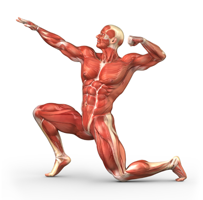 Anatomy Png Vector, Clipart, PSD.