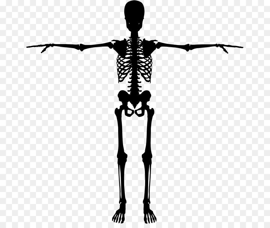 Skull Anatomy.