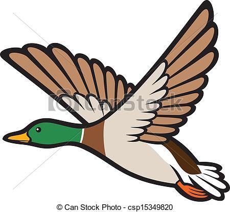 Illustrazioni vettoriali di mallard, volare, anatra.