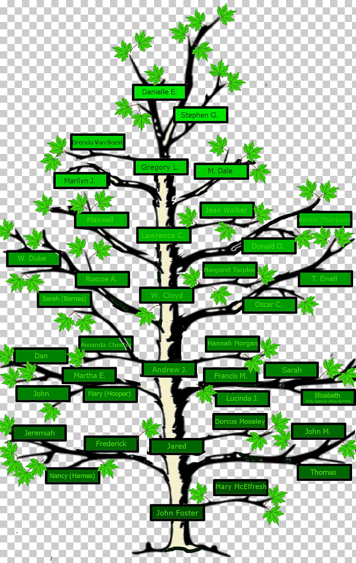 Family tree Genealogy Surname Ancestor, Family PNG clipart.