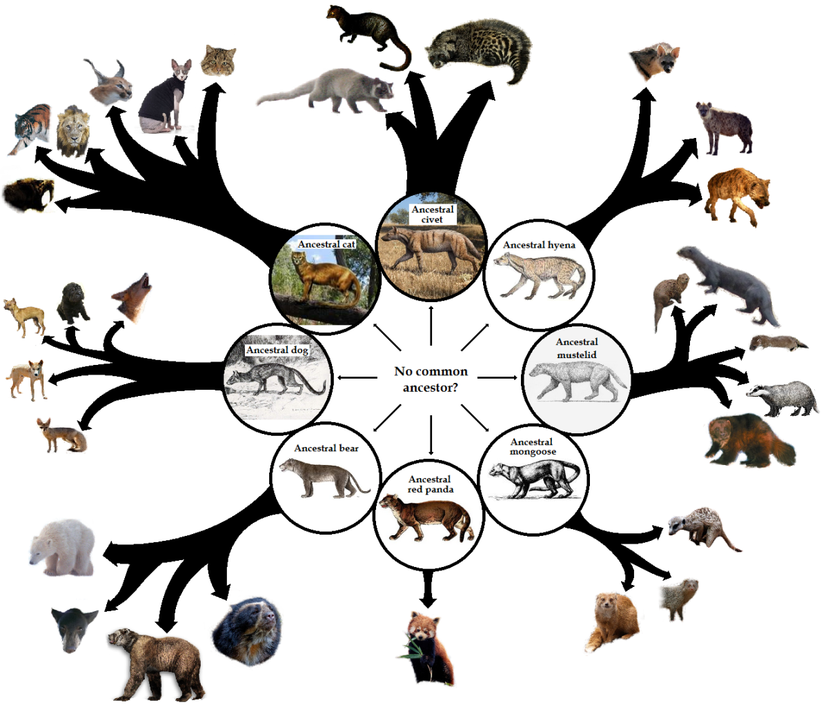 Ancestral cat spirit clipart clipart images gallery for free.
