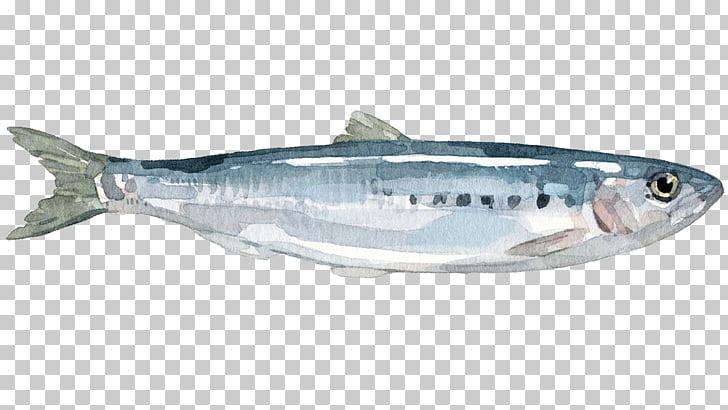 Sardine Mackerel Coho salmon Anchovy Herring, fish PNG.
