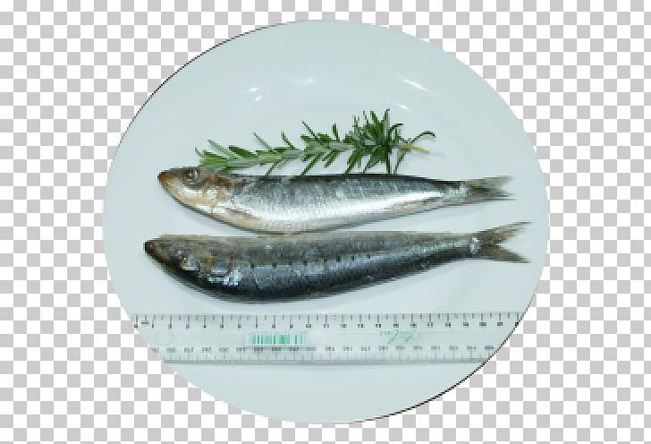 Pacific Saury Herring Oily Fish Sardine PNG, Clipart.