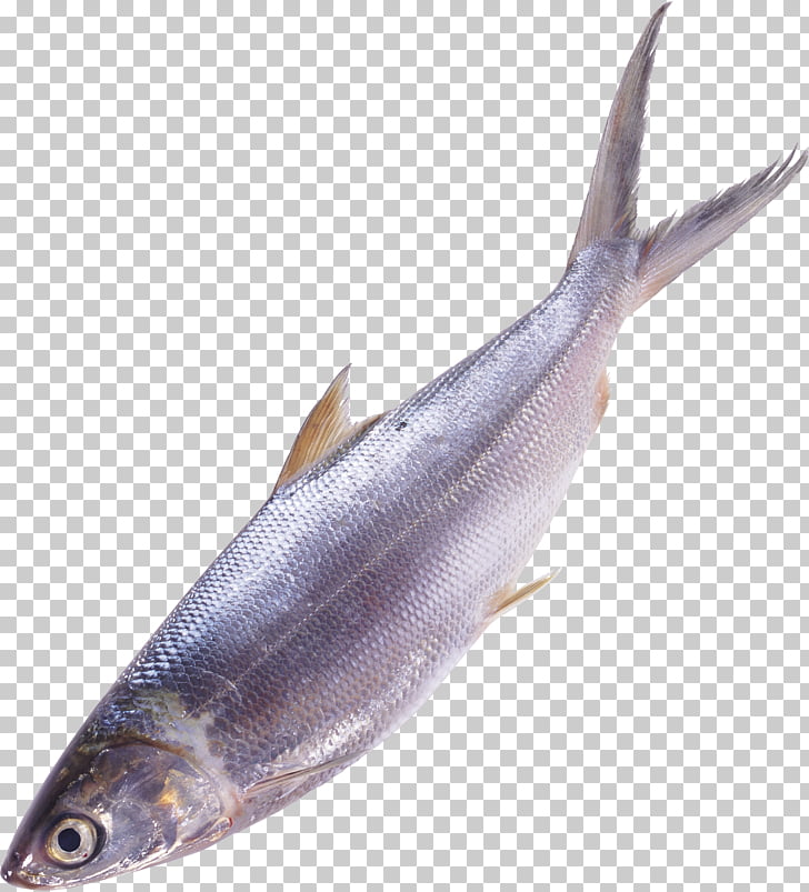 Fish Sardine Seafood , betta PNG clipart.