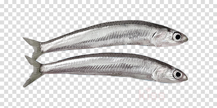 fish fish anchovy fish products forage fish clipart.