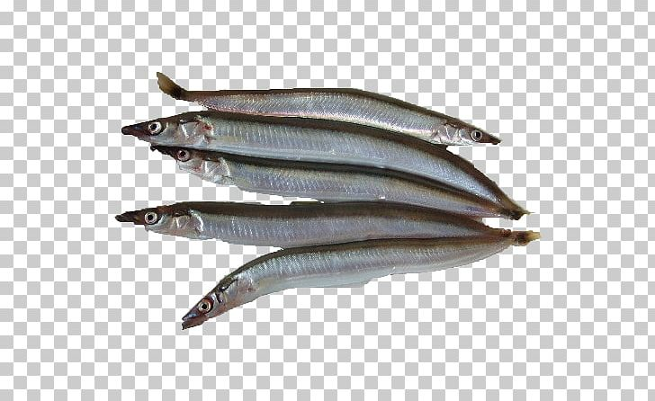 Sardine Pacific Saury Fish Products Anchovies As Food Oily.