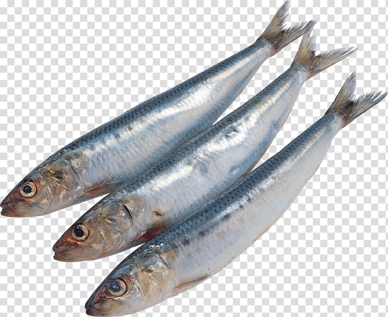 Sardine Pacific saury Fish Kipper Soused herring, all kinds.