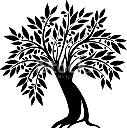 Old Olive Tree Stock Vector.