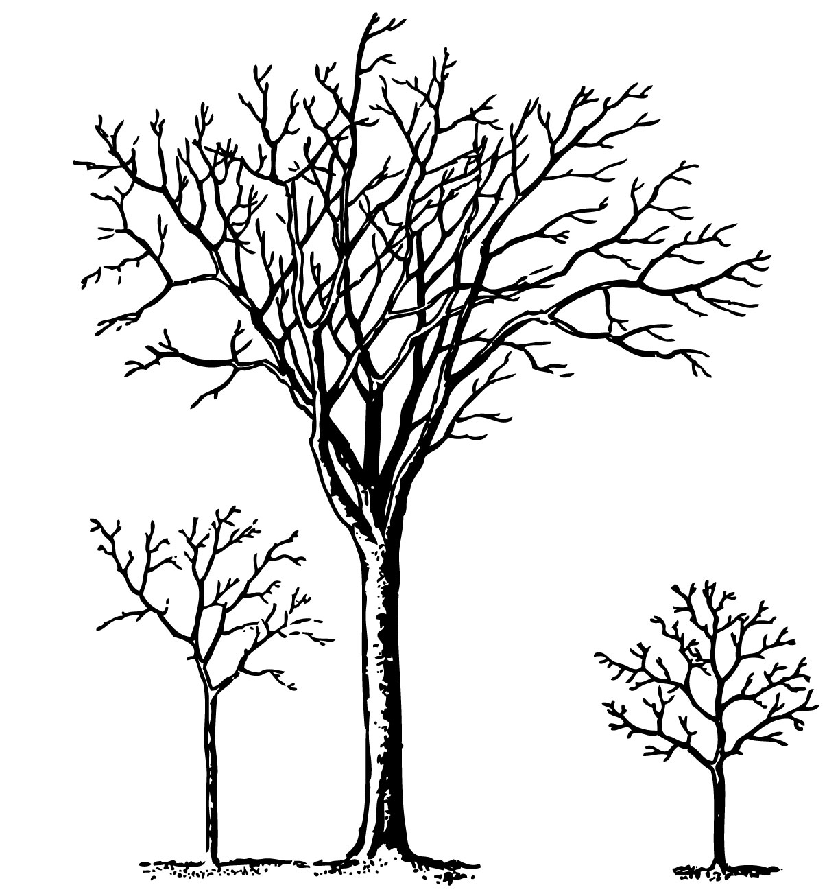 Gnarled black tree stump clipart 20 free Cliparts ...