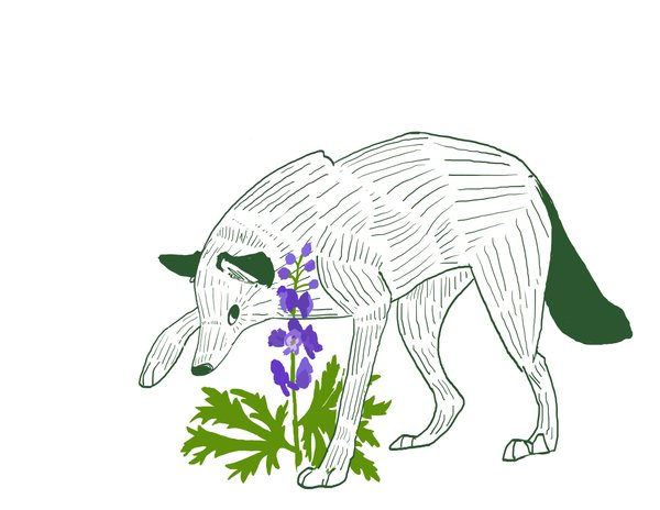 "Ems Blau on Twitter: ""Foxglove and Wolfsbane. I'm pretty happy."