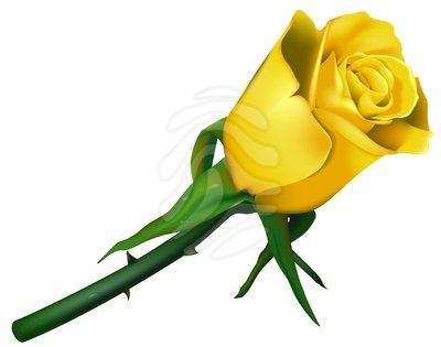 Clip art free yellow roses.