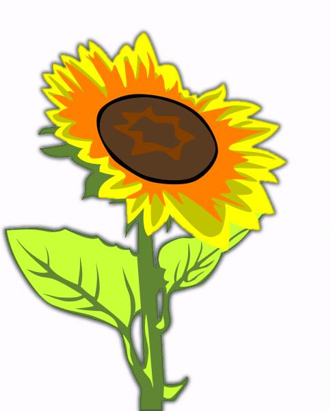 Beautiful Sunflower Clipart.