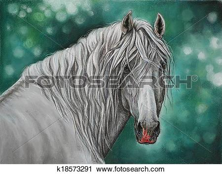Clipart of Andalusian horse portrait k18573291.