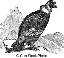 Andean Illustrations and Clip Art. 265 Andean royalty free.
