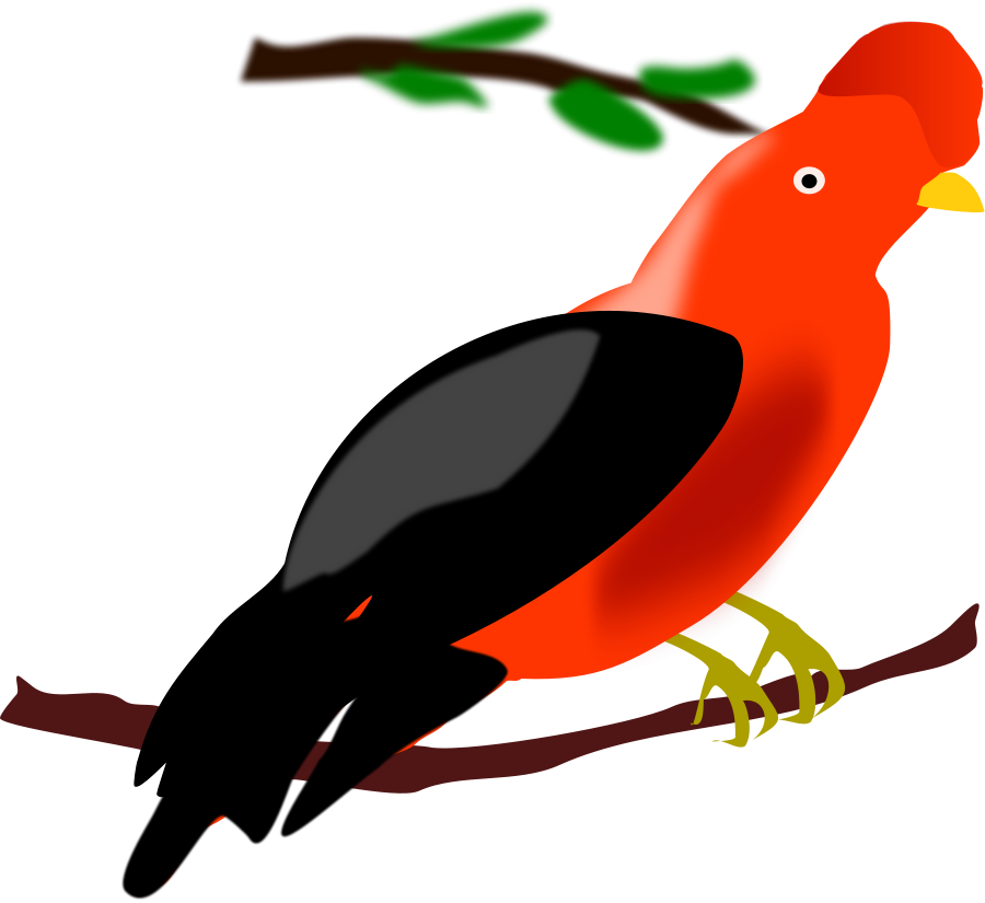 Andean Cock.