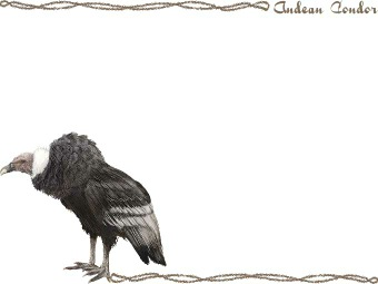Andean condor clipart 20 free Cliparts | Download images ...