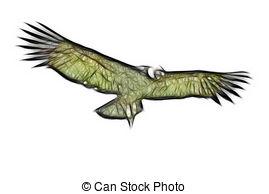 Drawings of Andean Condor Ecuador csp5610093.