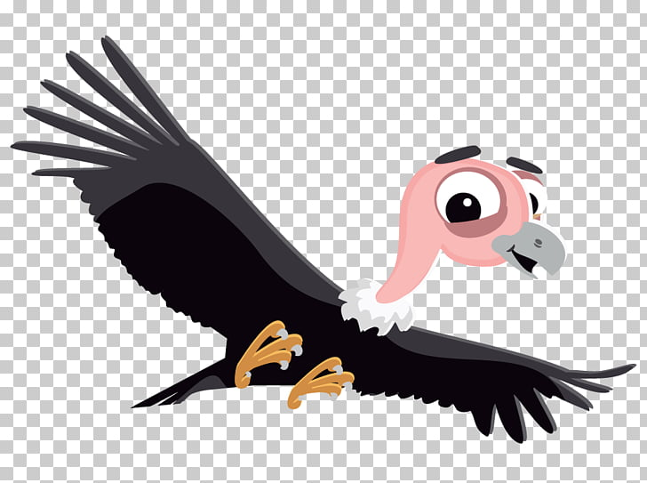 179 Condor PNG cliparts for free download.