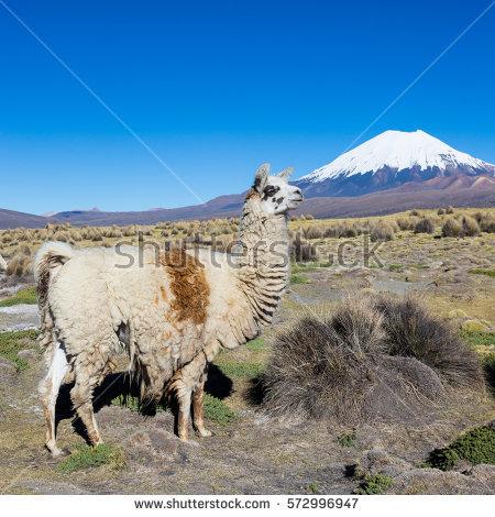 Andean Stock Photos, Royalty.