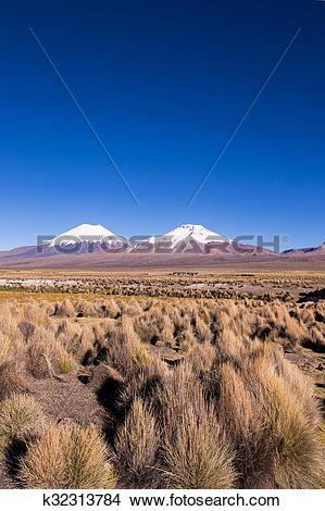 Stock Photo of Parinacota and Pomerade volcanos. High Andean.