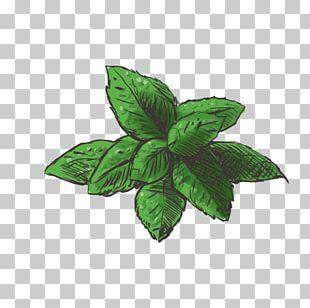 Mints PNG Images, Mints Clipart Free Download.