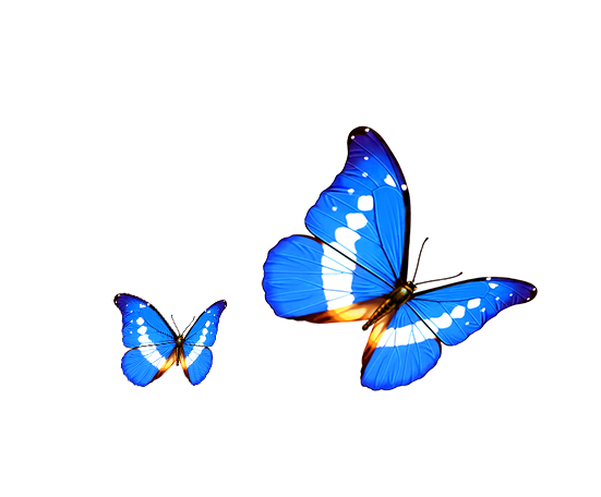 Butterfly Transparency and translucency Android Computer.