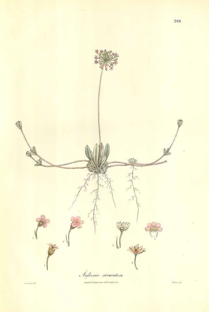 1000+ images about botanical illustration . herbarium . plants.