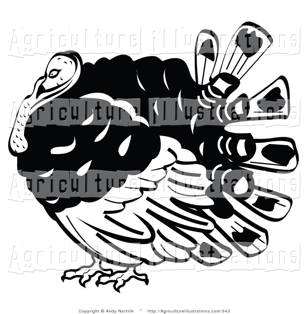 Agriculture Clipart of a Fat Turkey Bird with His Head.