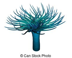 Anemone Illustrations and Clipart. 1,162 Anemone royalty free.