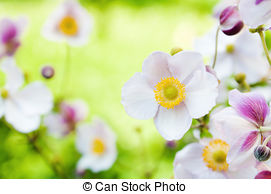 Japonica Images and Stock Photos. 1,177 Japonica photography and.