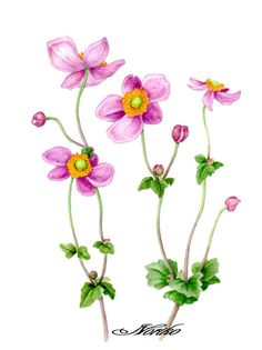 Anemones on Pinterest.