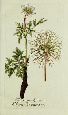 Flora von Deutschland Österreich und der Schweiz (1885.