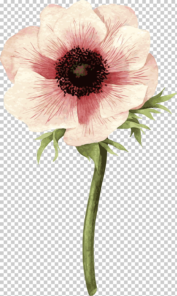 Hand drawn roses, pink anemone flower illustration PNG.