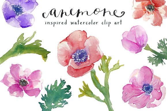 Watercolor Anemones Clip Art ~ Illustrations on Creative Market.