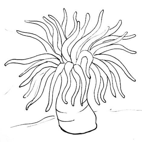 Sea Anemone drawing. For top of sensory tin. in 2019.