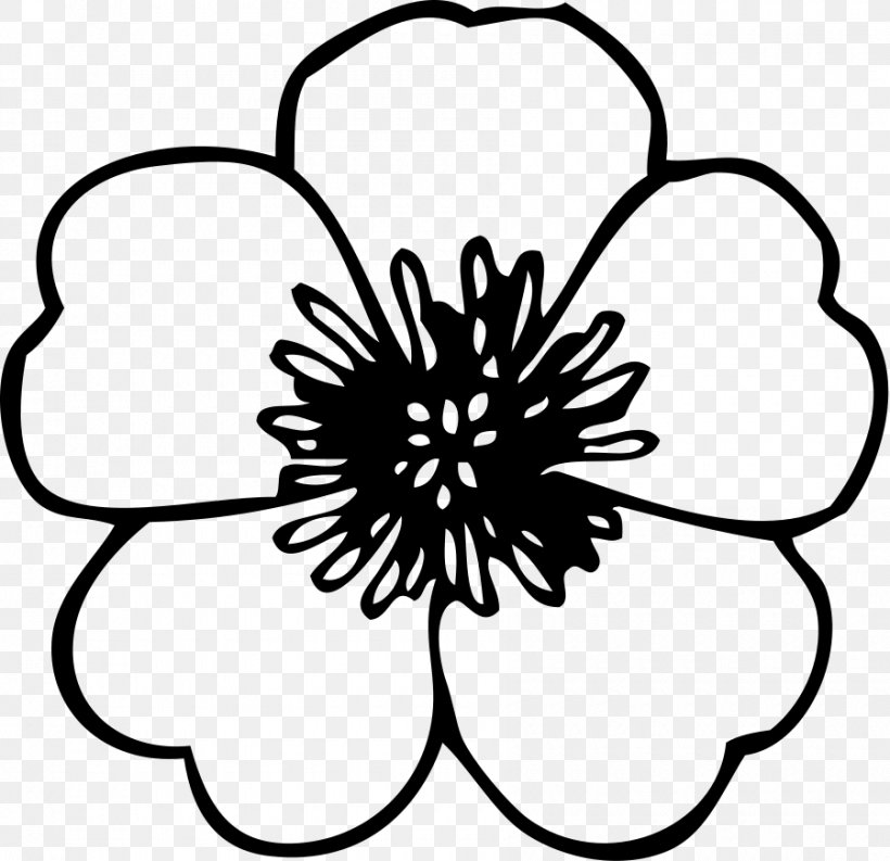 Flower Black And White Clip Art, PNG, 900x871px, Flower.