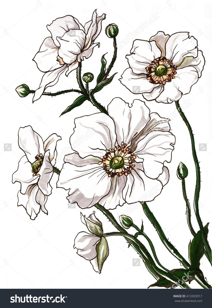 1000+ ideas about Anemone Flower Photos on Pinterest.