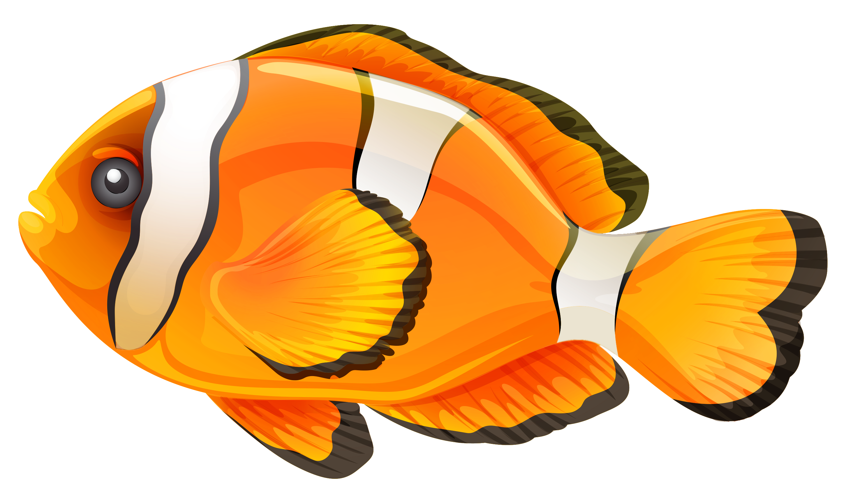 Clownfish free printable coloring page and clipart clown fish.