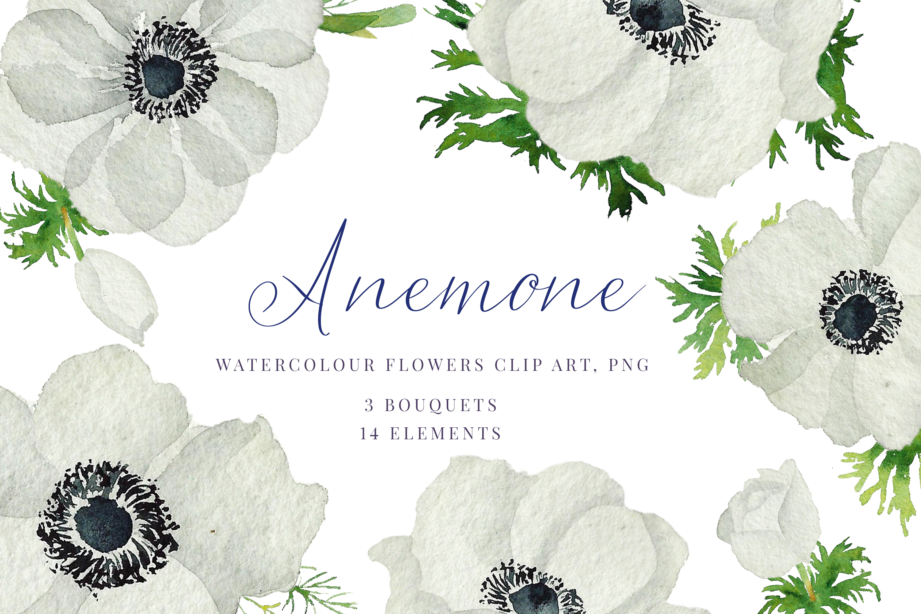 Watercolour Anemone, White, blue Anemones, Wedding clipart.