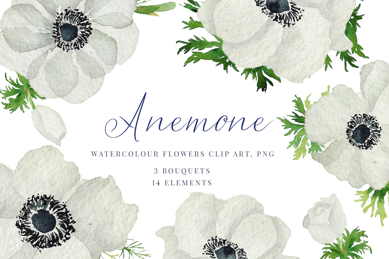 Watercolour Anemone, White, blue Anemones, Wedding clipart.